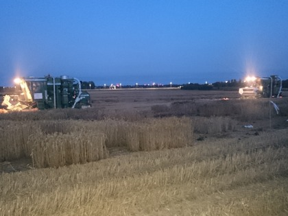 NIAB Cambridge night harvesting next to the A14